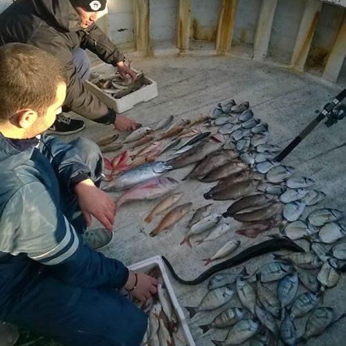 Fishmongers Scomber